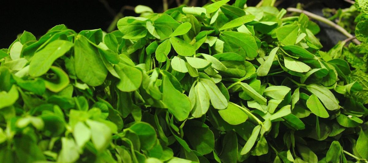 Fenugreek Benefits: Snapshot