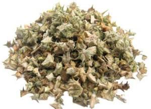 Buy Tribulus Extract capsules and powder